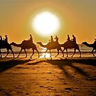 Camels on Cable Beach by Emma  Spencer