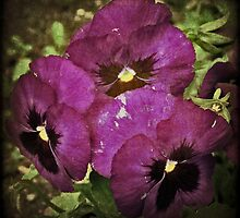 Pansies by Deb Gibbons