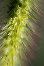 Grass - Macro by Debbie Pinard