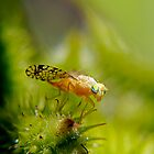 The Little Fly 2 - Macro by Debbie Pinard