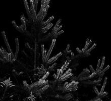 (Veiw Lg) Pine Tree At Night  by Tanya Keefe