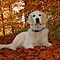 Show Us Your Pets Out In The Fall Colors