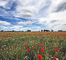 Essex Poppy Field by Nigel Bangert
