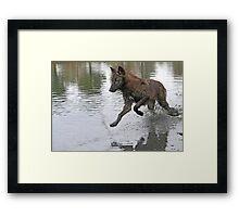 Making a splash, wolf style Framed Print