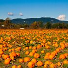 Pumpkin Patch by Shawnna Taylor