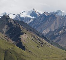 In Denali National Park by noffi