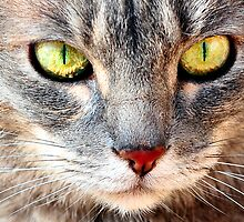 Cat Eyes by Neldene