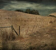 Golden Fields by Laurie Search