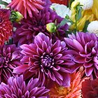 Backer Dahlias by ruthbacker