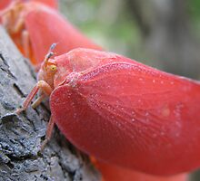 Flatid Bug ~ Madagascar by ChrisCoombes