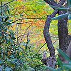 Nature's Weekday Colors Hidden In A Patch Of Woods by Roger Jewell