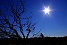 Outback Star by kurrawinya