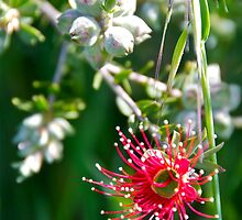 Amongst the Weeds by Helen Vercoe