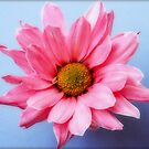 Untitled cute pink flower by George Kypreos