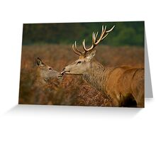Moment of Tenderness Greeting Card