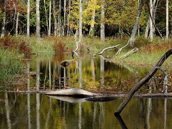 Beaver Pond- Eels Creek Provincial Park by Tracy Faught