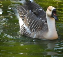 Goose. by Vitta