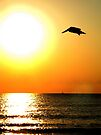 Pelican at Sunrise - Fort Lauderdale, Florida by Debbie Pinard