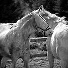 2 WHITE HORSES by scarletjames
