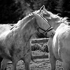 2 WHITE HORSES by scarlet james