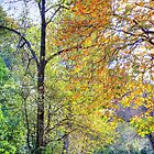 Autumn down the Glen by Charles  Staig