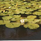 Water Lilies by Mona Gainey-Lanier