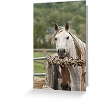 Over here - Silver Creek Ranch, Ottawa, Ont Greeting Card