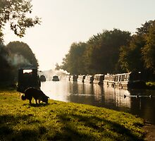 Autumn morning - Grand Union Canal, Cosgrove by David Isaacson