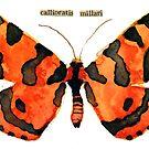 Callioratis Millari (Millar's Tiger Moth) by Carol Kroll