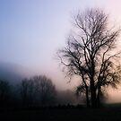Tree in the mist. Hutt River Park, Upper Hutt, New Zealand by Fineli
