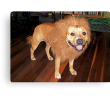 Woof or Roar? I'm confused Canvas Print