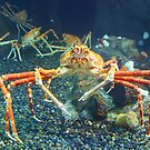 Crab World by vasu