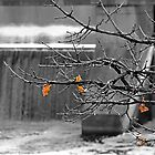 Almost Gone - Manotick Ontario by Debbie Pinard