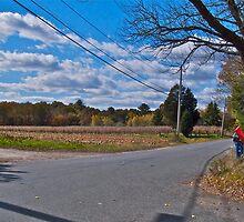 Pumpkins & Corn on the Turf Farm - Tibbit's Farm - Fall in Rhode Island by Jack McCabe