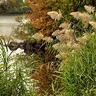 Autumn on the Mystic River by Monica M. Scanlan