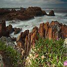 Wild West Coast by Kylie  Sheahen