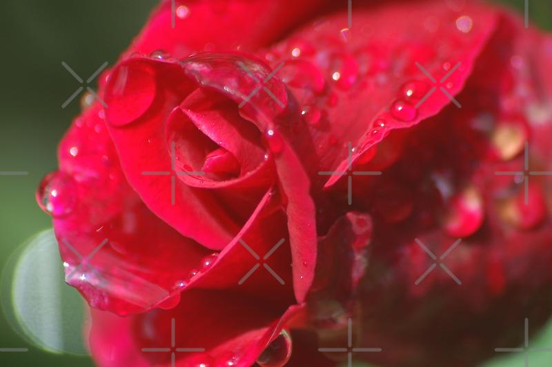 Crying beauty by loiteke