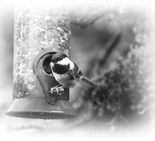Chickadee Black & White by Jonice