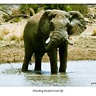 Chobe and other Elephants by Paul Lindenberg