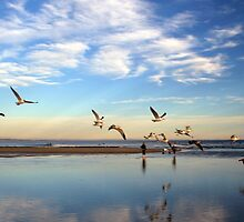 flying birds by DBArt