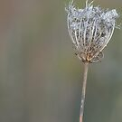Even weeds can be beautiful! by kneff