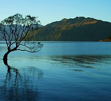"""loner"" lake wanaka, south island nz by rina  thompson"