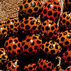 Ladybird conference by Dustinit