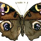 Inachis Io (Peacock Butterfly) by Carol Kroll