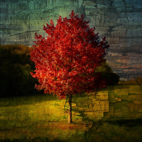 Automn Red by Philippe Sainte-Laudy