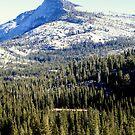 """""""Tenaya Peak"""" by Lynn Bawden"""