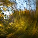Whirling Autumn Leaves by Hilary Robertshaw