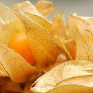 Cape Gooseberry by vbk70