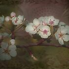 Cherry Blossom Time by Linda Cutche