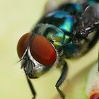 Copper-tailed blowfly by Etwin